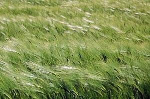 Piegato dal vento