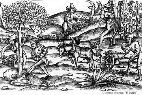La vite è cinta da una siepe perché non sia mangiata da bovi e capre selvatiche. (Georgiche II, 371-396)