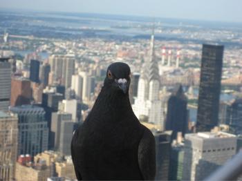 Bombacarta e new york mi guarda dall 39 alto for New york dall alto