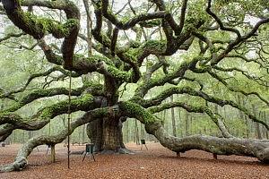 albero incredibile