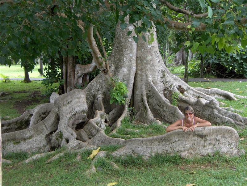 La fantasia ha grandi radici bombacarta - Grandi alberi da giardino ...